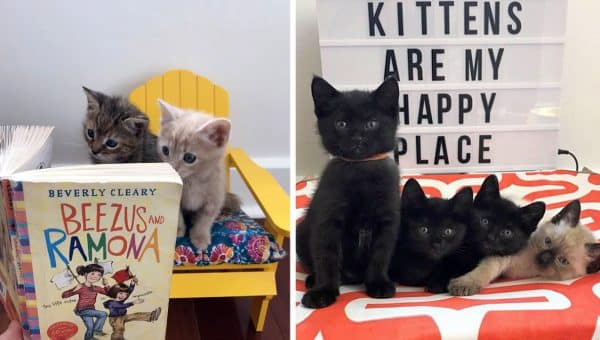 World's Best Kitten Foster Mom Uses Instagram Skills to Find Every Kitten a Forever Home