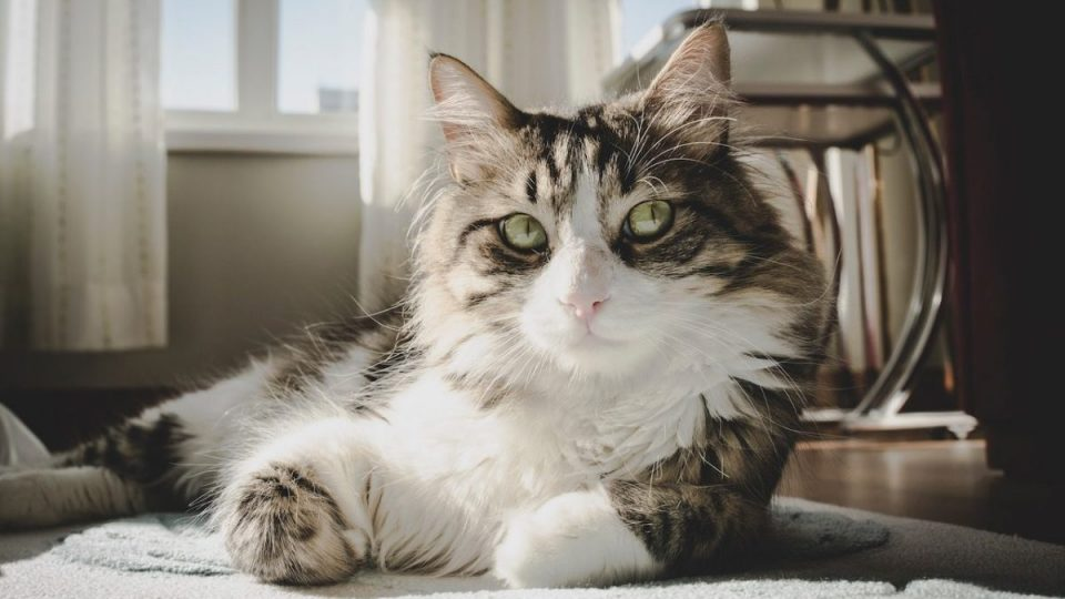 cat lounging on floor
