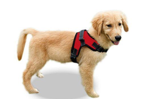 puppy wearing red Copatchy harness