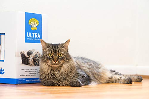 9 Best Cat Litters for Your Feline Friend | The Dog People