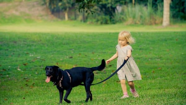 How to Teach Your Kid to Walk the Dog