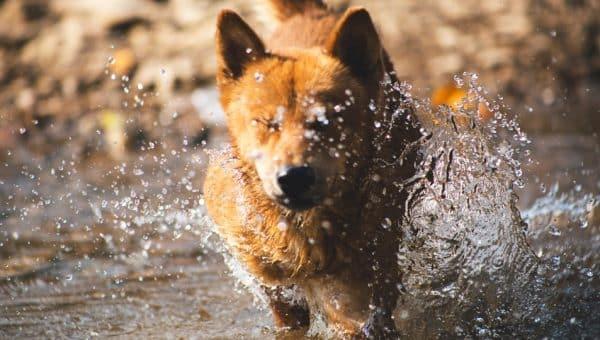El peligro del agua salada para los perros