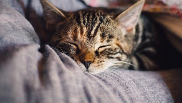 """The Best Cat Names that Start with """"T"""" for 2019"""