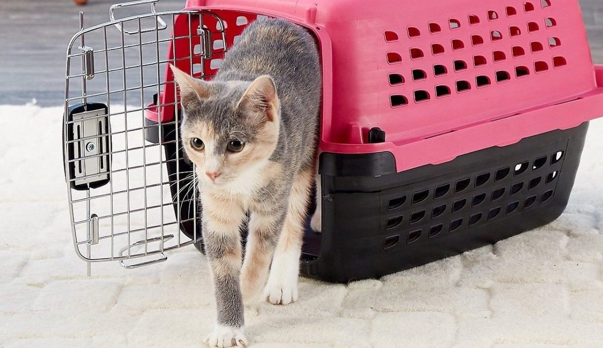 cat walking out of cat carrier