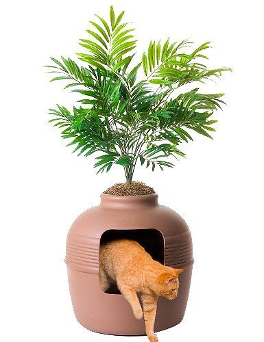 orange tabby coming out of litter box disguised as planter