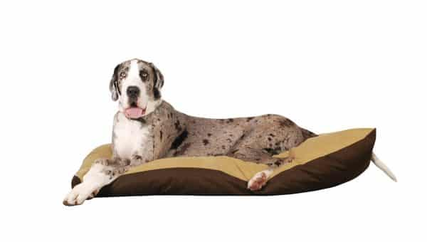 The Best Dog Beds For Great Danes in 2019