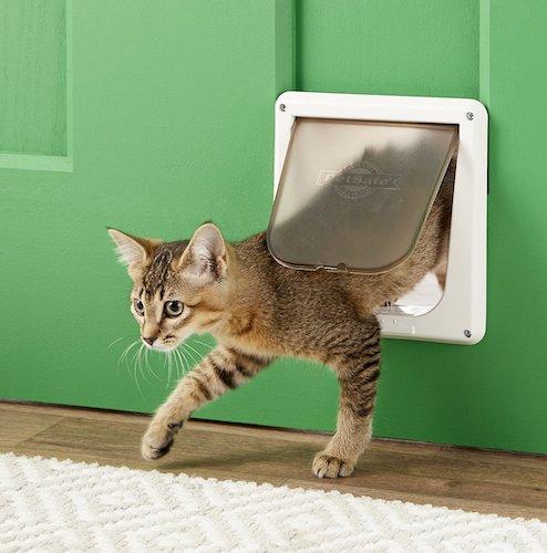cat stepping through Petsafe locking pet door