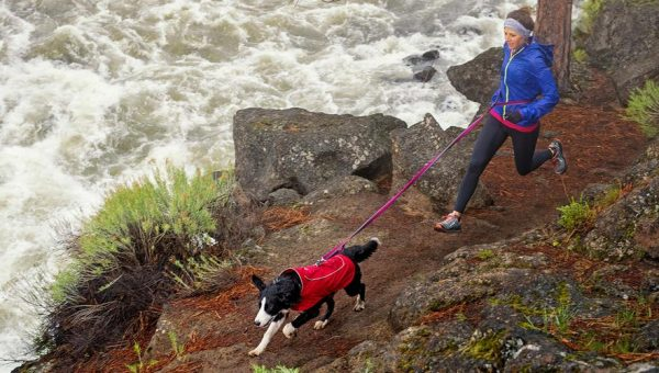 Top 10 Waterproof Dog Coats to Keep Your Buddy Dry
