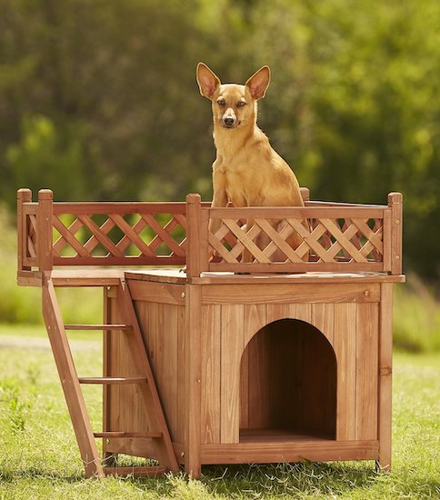 dog in Merry Products wood pet house