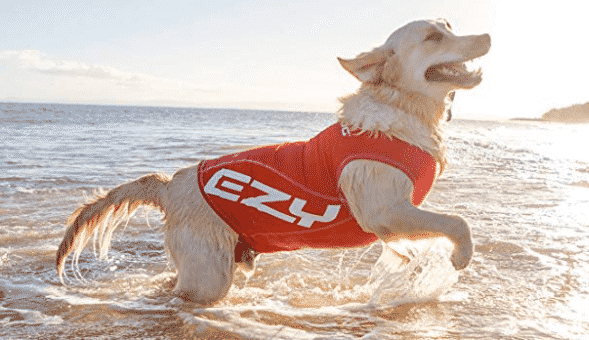 22 Dog T-Shirts and Tank Tops To Keep Your Dog Cool and Stylish This Summer