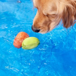 Chewy Kurgo skipping stones 2 pack pool toy for dogs