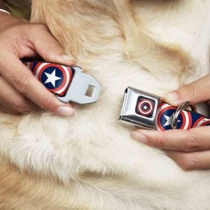 Chewy Buckle-Down Captain America dog collar Fourth of July outfit for dogs