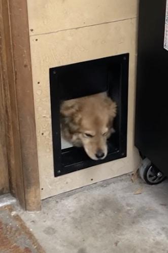 Solo automatic pet door