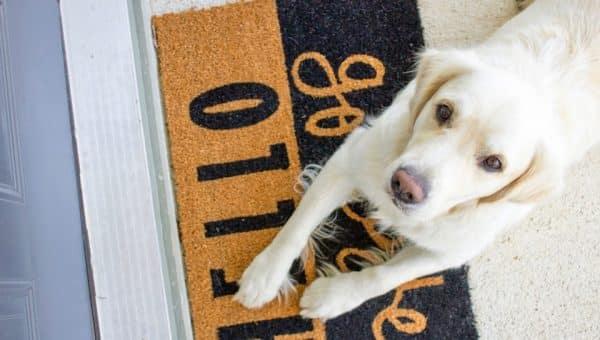 7 brosses pour chien qui vont vous changer la vie