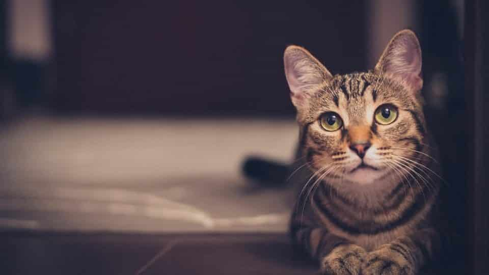 cat looking towards reader