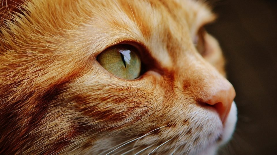 Unique Cat Names: Uncommon Cat Names for Your Quirky Feline in 2019