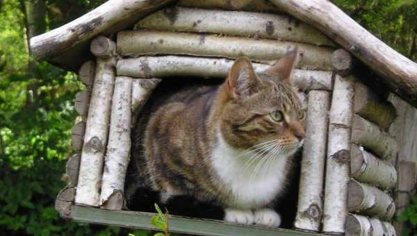 cat looking out of log kitty house