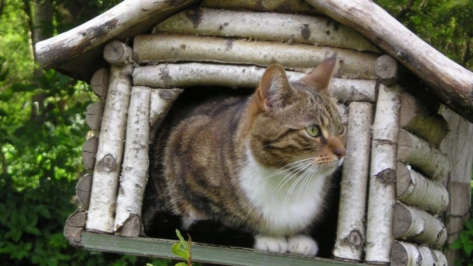 Outdoor Cat Houses Outdoor Cat Houses Offer Safety And Warmth
