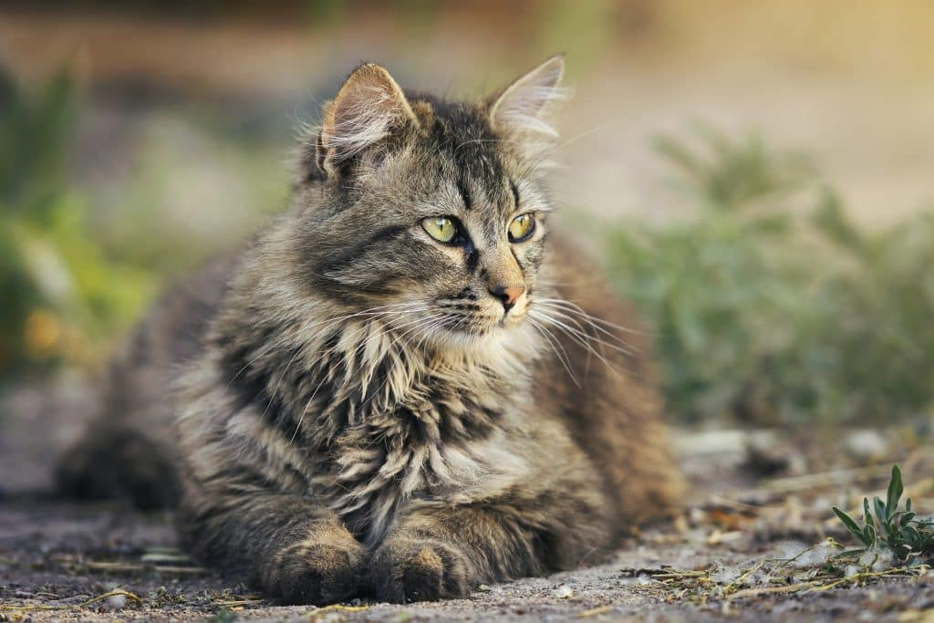 Unique Cat Names Uncommon Cat Names For Your Quirky Feline In 2019