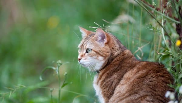 How to Get Rid of Ticks on Cats