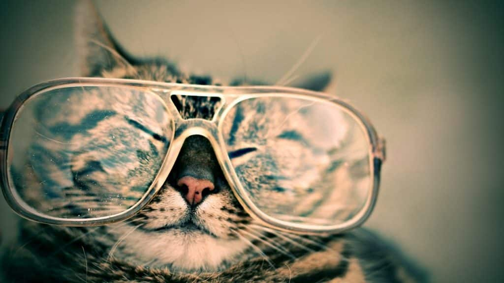 The Best Cool Cat Names for 2019 | The Dog People by Rover com