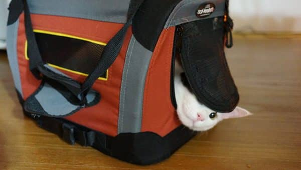 10 Best Cat Carriers for Traveling Kitties