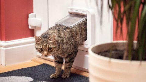 cat walking through cat door