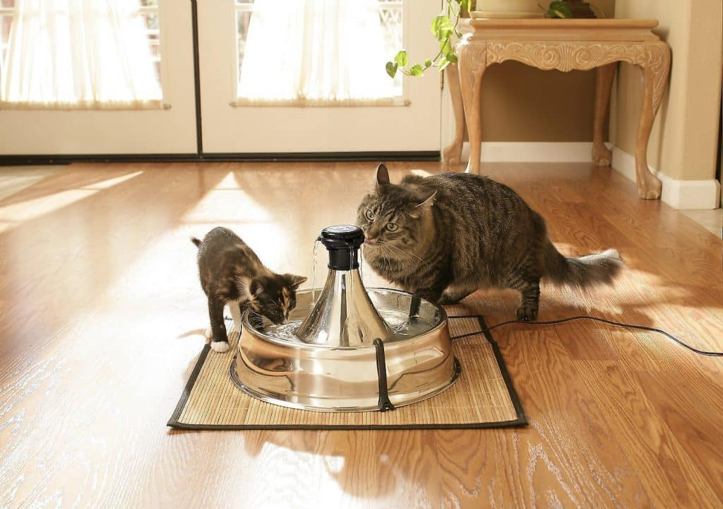 two cats drinking from Drinkwell stainless steel bowl