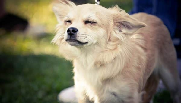 7 Best Dry Dog Shampoos for Stinky Dogs