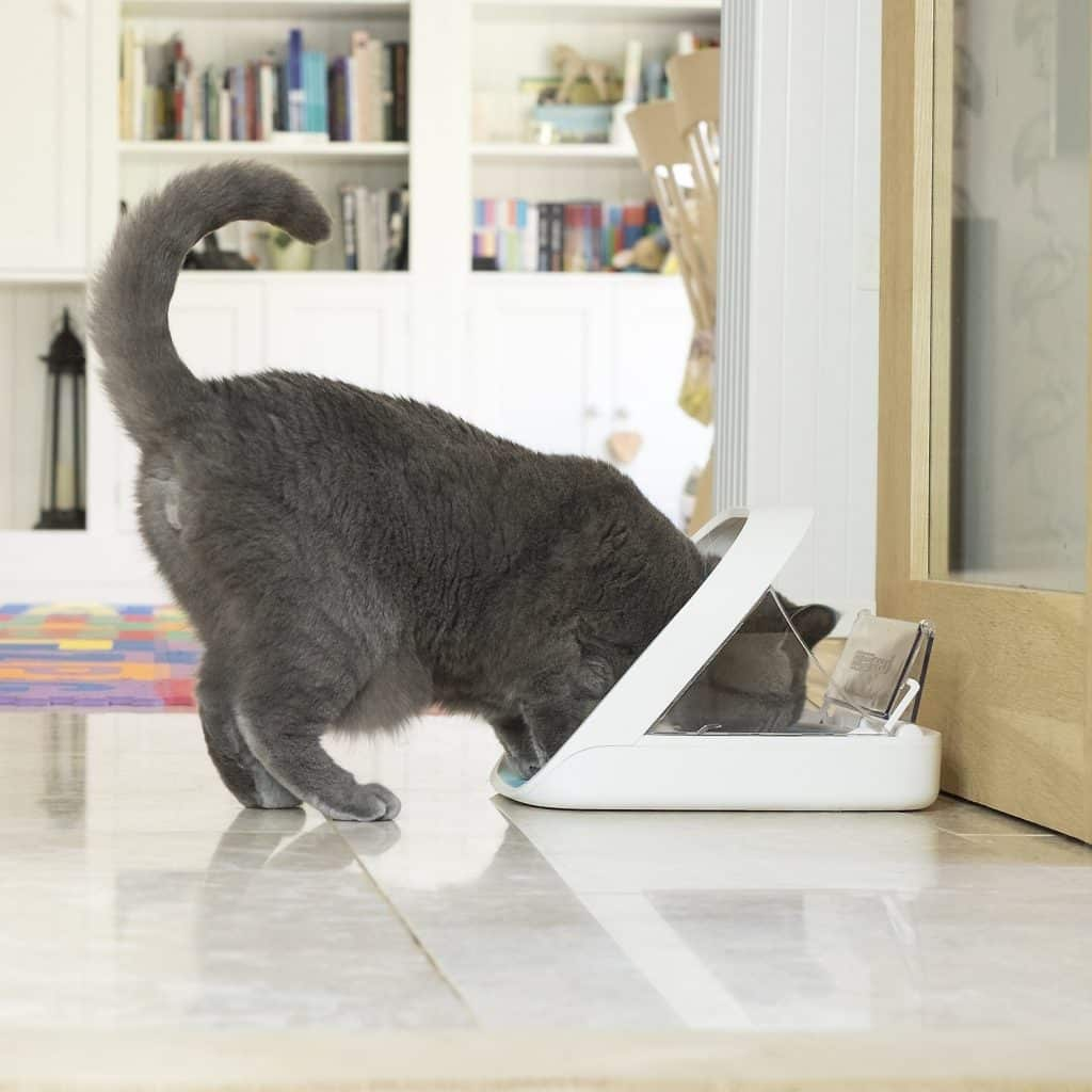 Surefeed automatic cat feeder