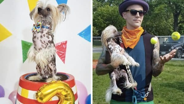 Gizmo the Hairless Circus Dog Is Ready to Make Your Day [Video]