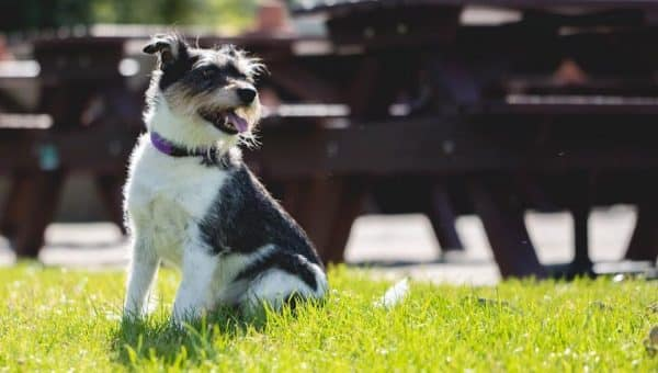 Top 7 Dog-Friendly Pubs in Dorset