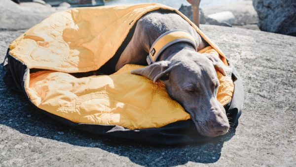 7 Best Dog Sleeping Bags for 2019