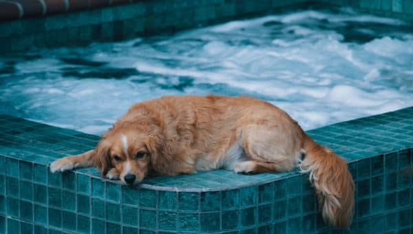 Can My Dog Go in the Hot Tub?