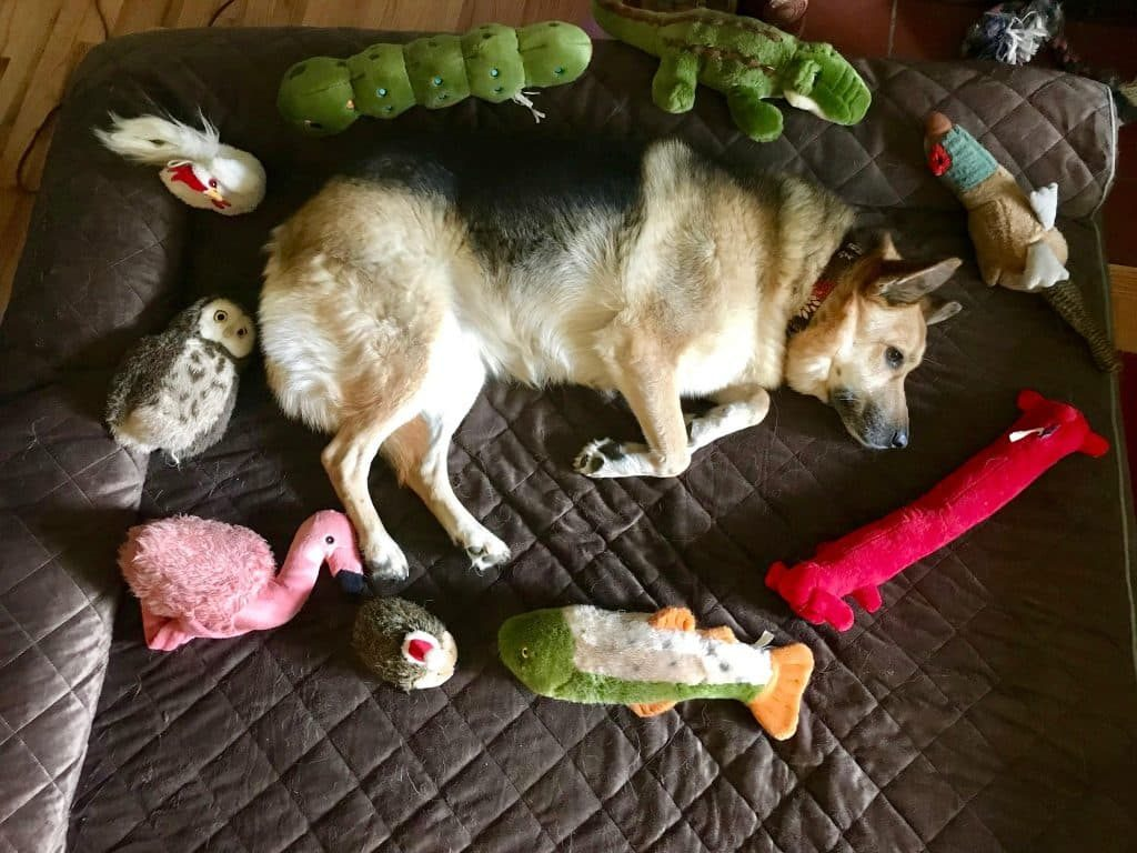 Picture of: The Very Best Dog Beds For Large Dogs 2020 Updated