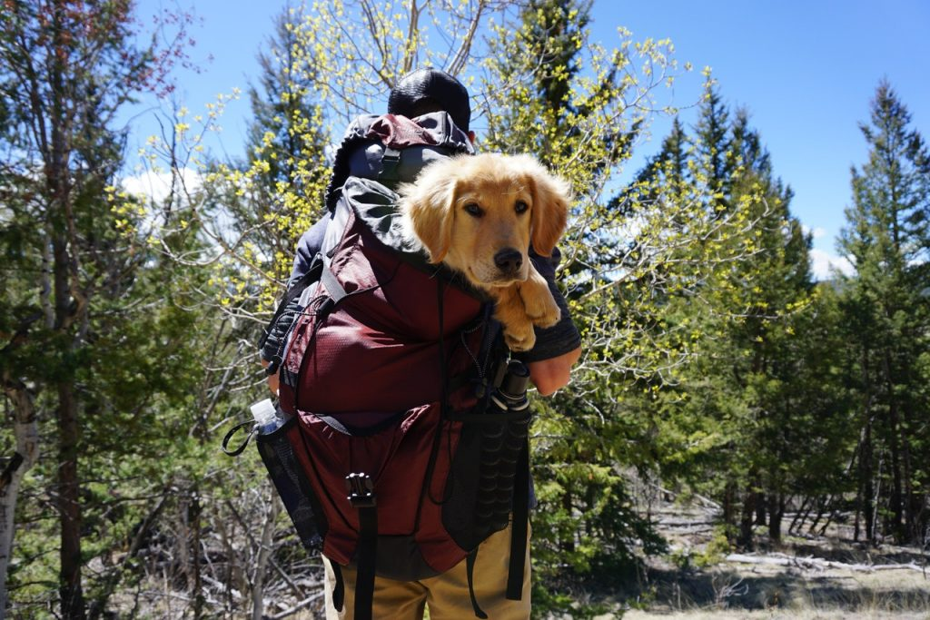 dog days of summer guide outdoor recreation section man carrying dog in backpack on trail