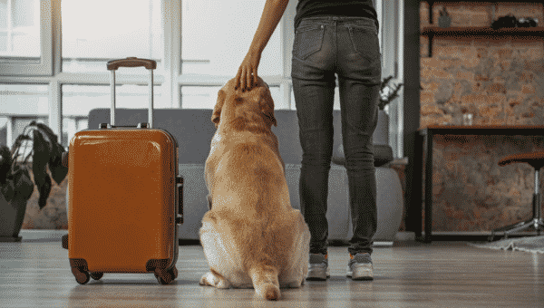 All You Need to Know About Pet Passports After Brexit
