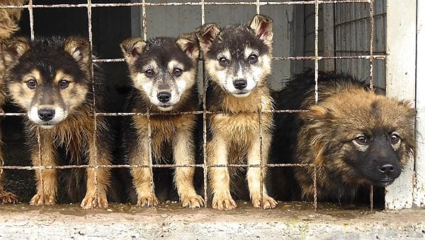 Romanian Animal Rescue Is on A Mission to Help Country's Enormous Stray Dog Population