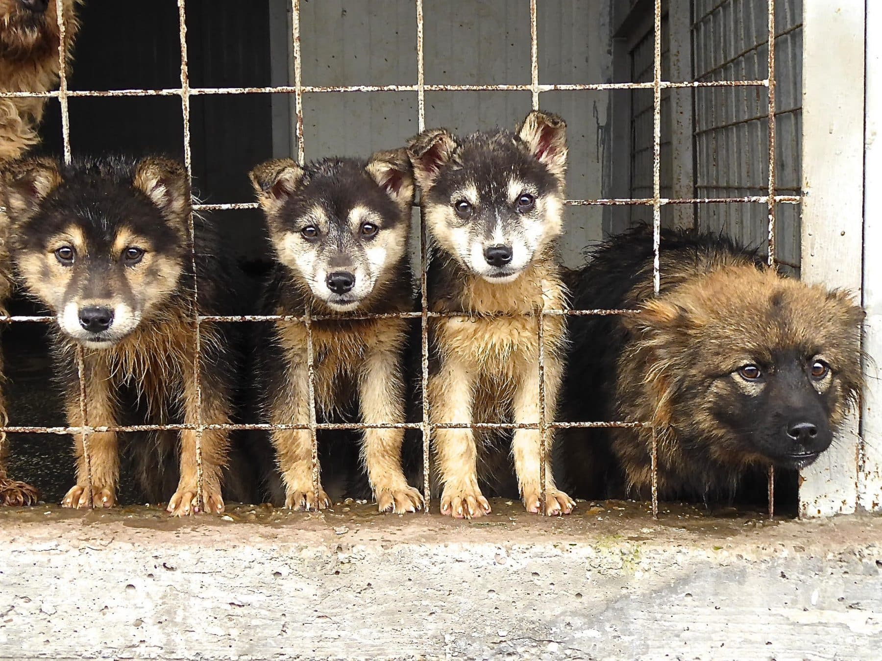 Romanian Animal Rescue Is on A Mission to Help Country's