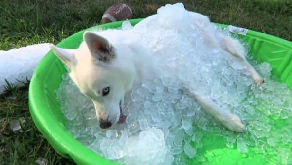 Pour un été rafraichissant et fun, adoptez la piscine pour chien