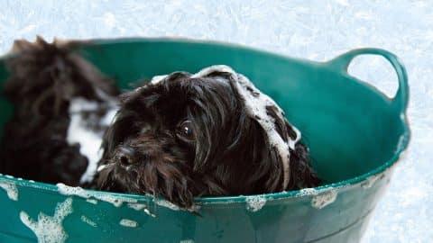 Puppy in a bath tub puppy shampoo cover image