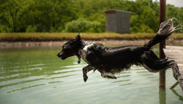 This Dog Loves Swimming More Than Life Itself and It's Pure Joy to Watch
