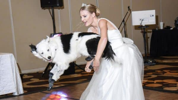 Bride Wows Wedding Guests with Epic Dance — with Her Dog! [Video]