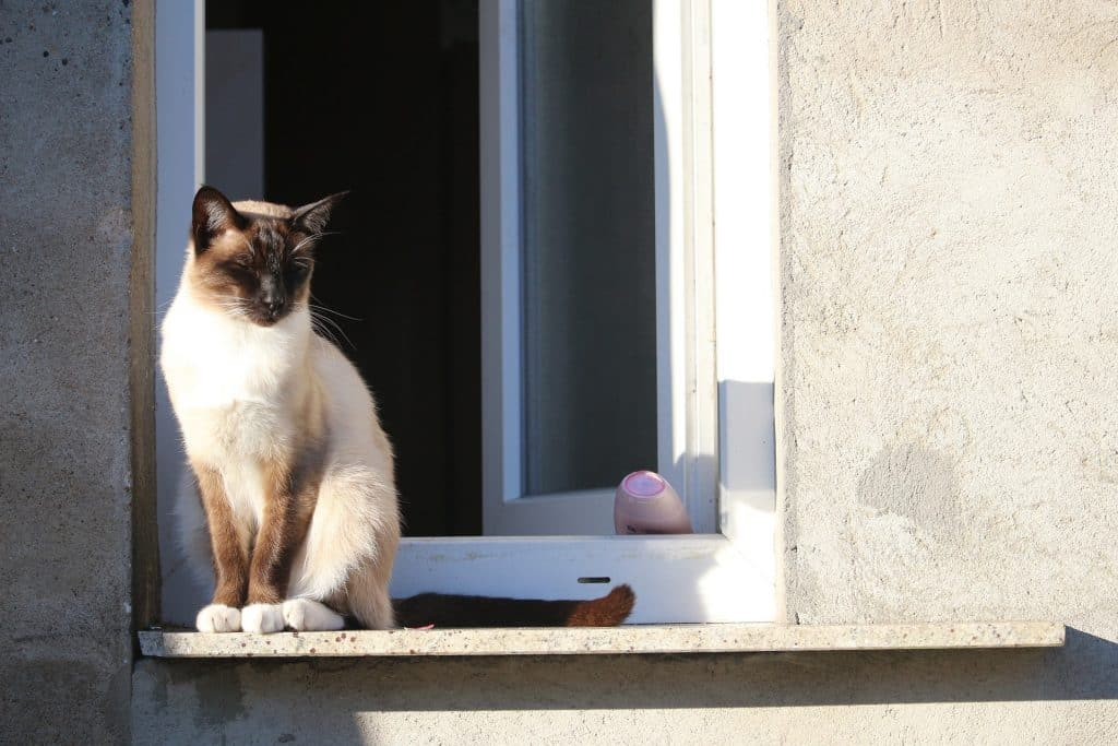 The Best Cool Cat Names for 2019   The Dog People by Rover com