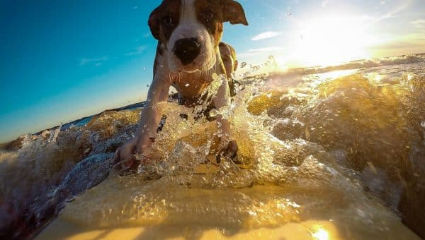 What Are the Dog Days of Summer, Anyway?