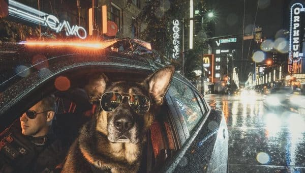 Vancouver BC's K9 Calendar Raises Big Bucks for Charity