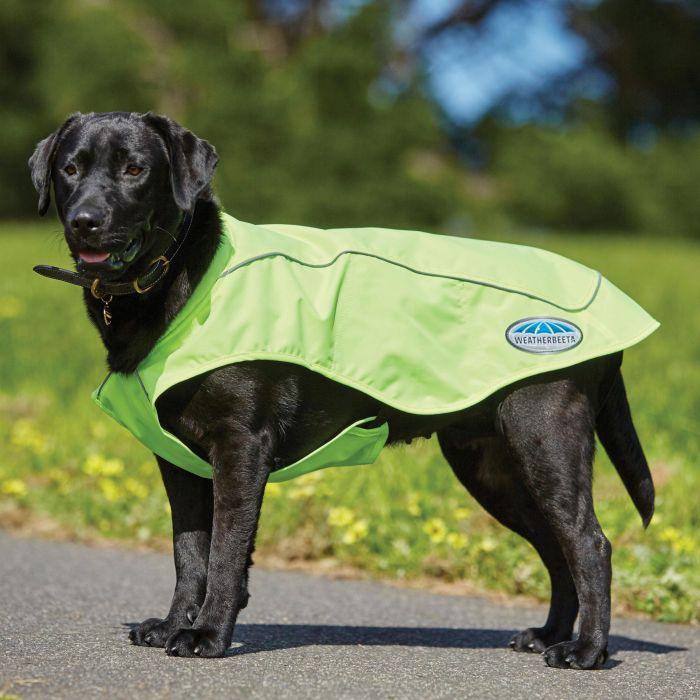 Top 10 Waterproof Dog Coats To Keep, Best Winter Dog Coat Uk