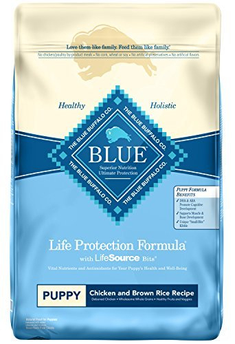 Chewy Blue Buffalo life protection formula puppy best dog food for Australian shepherds