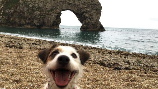Top 6 Dog Walks in Dorset