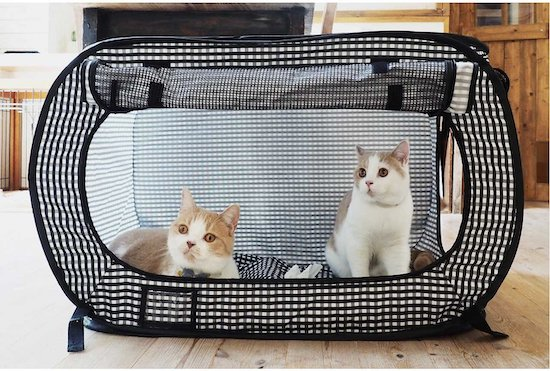 two cats in Necoichi cat playpen